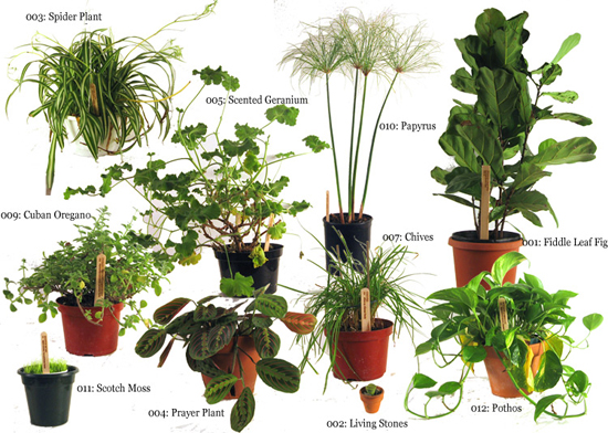 the life cycle of an plant process
