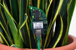 Botanicalls Kits let plants reach out for human help! They offer a connection to your leafy pal via online Twitter status updates to your mobile phone. When your plant needs water, it will post to let you know, and send its thanks when you show it love.